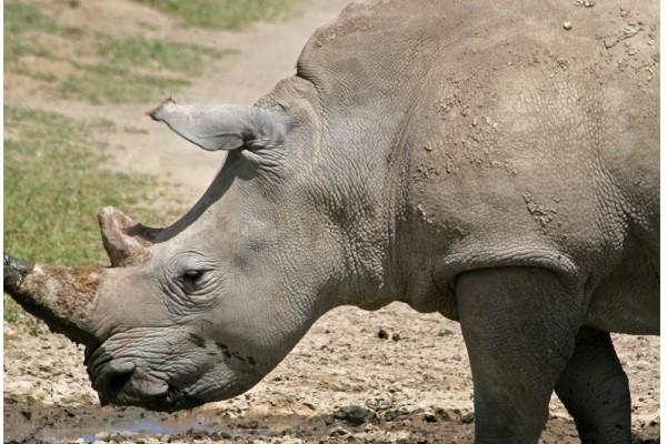 Un 83 % de mamíferos tropicales y un 58 % de aves, víctimas de la caza